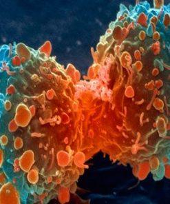 Anticancerígenos
